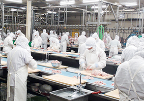 食鶏工場 様子